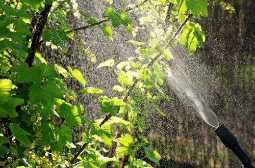eco-friendly-gardening-tips